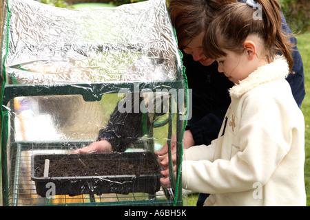 Madre ayudando a su joven hija Coloque bandejas de semillas plantadas en un pequeño invernadero de plástico para la germinación en primavera