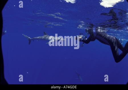 NA, México, las Islas Socorro Diver filmaba tiburón sedoso (Carcarhinus falciformis)