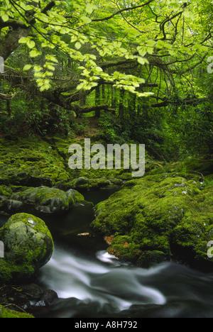 Tollymore Park en Irlanda del Norte en las Islas Británicas con el arroyo que corre a través de la vegetación verde
