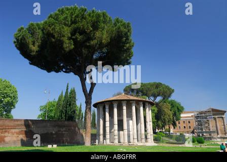 Pino con antiguas ruinas del Templo de Hércules en Roma Italia