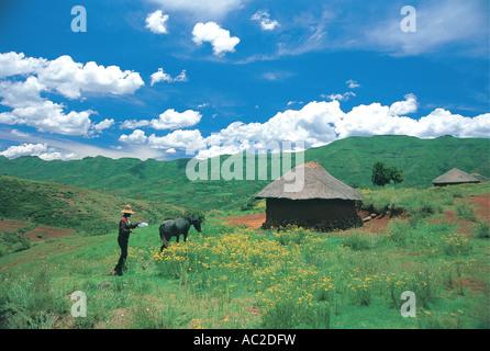 Basotho al hombre con su pony y choza de exuberante verde césped de verano en la Montaña del Reino de Lesotho nota Foto de stock