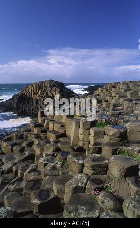 Ahorro creciente entre las columnas hexagonales de los Giant's Causeway, Co Antrim, Irlanda del Norte.