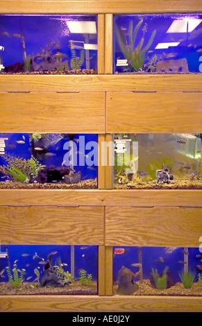 Una pantalla de peces tropicales, se apilan tres (3) de alto, en una tienda de mascotas en Utah, EE.UU.