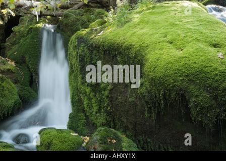 Mossy cae en el lado del Rey Barranco Trail durante los primeros meses de otoño situado en las Montañas Blancas de New Hampshire, EE.UU.