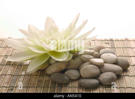 Piedras y una hermosa flor Foto de stock