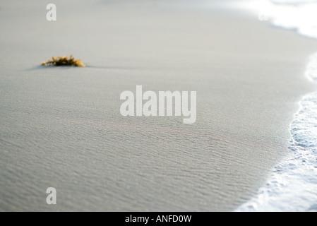 Trozo de algas en la playa cerca de surf
