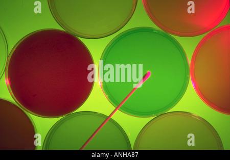 Placas de Petri multicolores, medios de cultivo utilizados en laboratorios de investigación para el crecimiento celular