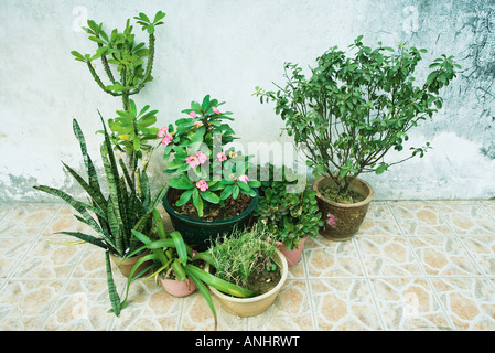 Plantas en maceta