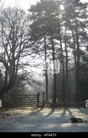 La luz de la mañana temprano y Frost, a través de los árboles en el parque de ciervos mersham le escotilla entre Ashford y lías brabourne, Kent, Inglaterra, Reino Unido.