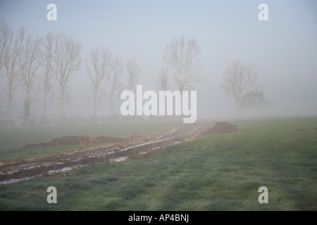 Misty campo con árboles en invierno, lías brabourne, Ashford, Kent, Inglaterra, Reino Unido.