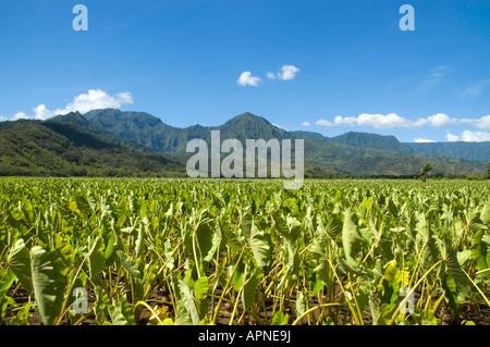 Las plantas de taro y granjas de Hanalei Bay islas hawaianas de Kauai Princeville EE.UU.