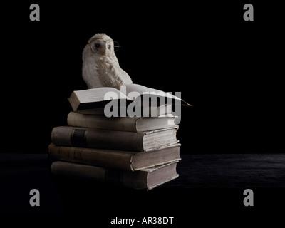 Búho sabio y libros
