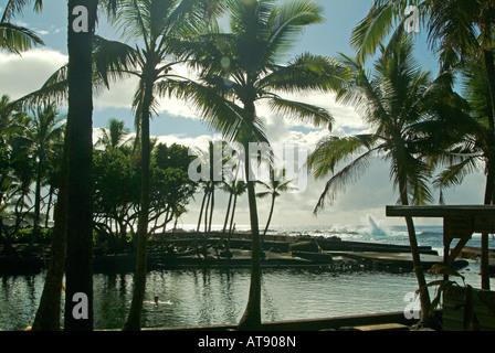 - Estanque caliente Ahalanui Pahoa, Isla Grande de Hawaii. El agua es salobre pero muy clara y los peces suelen nadar junto con los visitantes