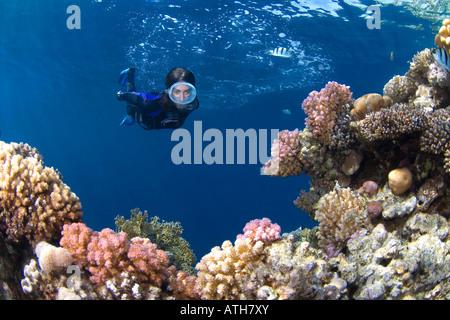 Bucear en el arrecife de coral, Mar Rojo, Egipto, submarino, buceo, snorkel, Ocean diver, hembra máscara oval, arrecifes de coral, bosques tropicales, arrecifes