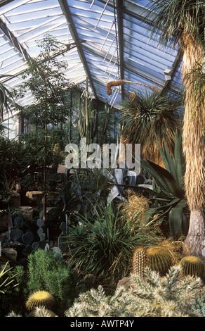 Varios cactus encontrados en la Princesa Diana de Gales (Conservatorio de kew