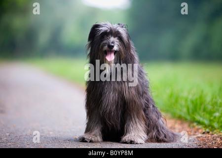 Border Collie perro sentado en la calle