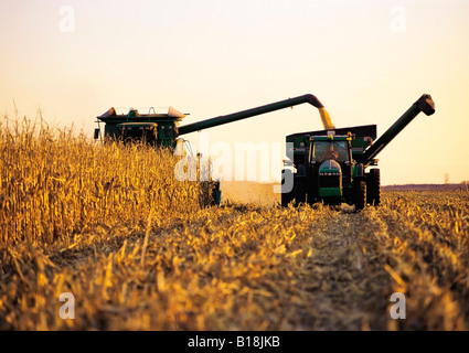 Descarga de la cosechadora de grano/alimentación en un grano de maíz en el vagón vaya, cerca de Carey, Manitoba, Canadá