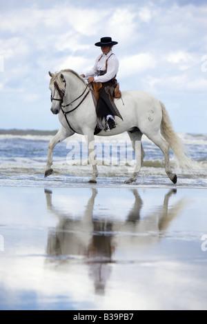 Caballo Andaluz con Amazona - en la playa