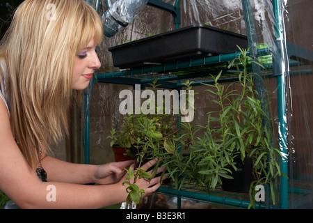 Joven mujer de pelo rubio adolescencia veinte tendiendo macetas de hierbas cultivadas en casa en un mini invernadero en un jardín.