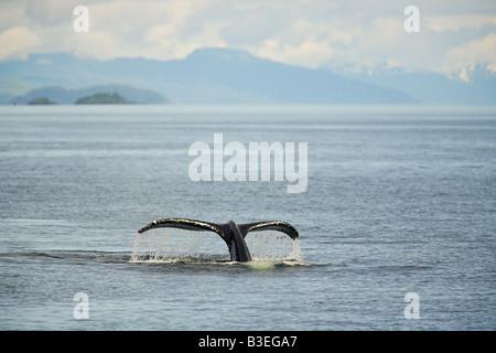 Cola de ballena jorobada.
