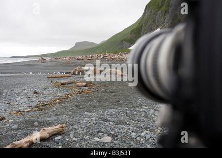 Cámara digital con lente largo sobre un trípode para fotografiar osos pardos costeros con alimentación desde un cadáver de ballena en la playa Katmai