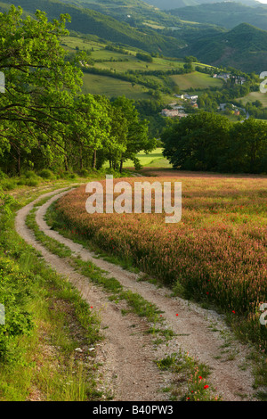 Una pista agrícola a través de campos de flores de primavera en la Valnerina cerca de Preci, Umbría. Foto de stock