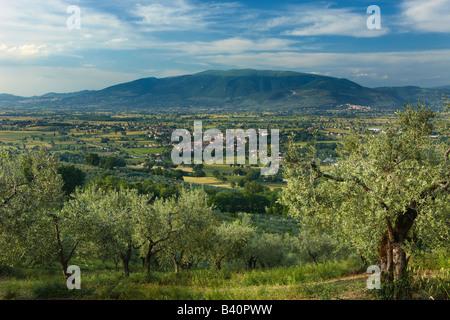 Un olivar con vistas a Bevagna y Val di Spoleto, Umbria, Italia