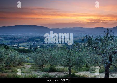 Un olivar con vistas a Bevagna y Val di Spoleto al amanecer, Umbría.