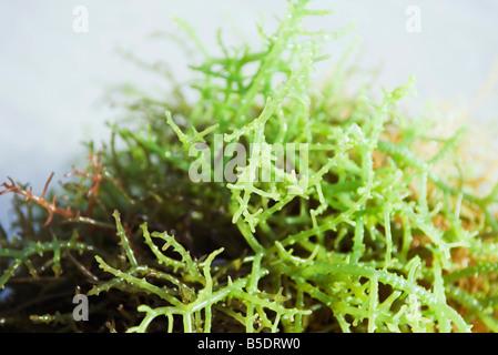 Pila de algas