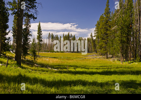 El Parque Nacional Yellowstone, Wyoming USA Riddle zona lacustre