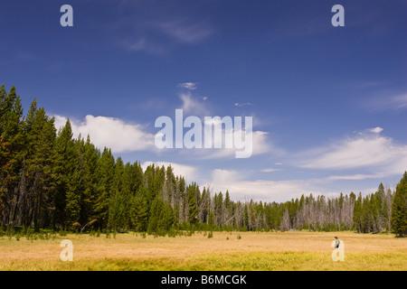 El Parque Nacional Yellowstone, Wyoming, EE.UU. - Boy caminatas a través de pradera Riddle zona lacustre. Señor