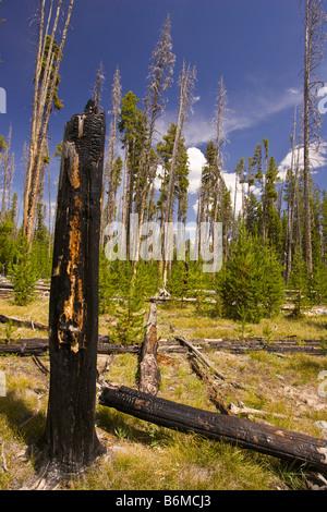 El Parque Nacional Yellowstone, Wyoming USA - carbonizado tocón de árbol en el bosque en el área del lago Riddle