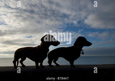 Teckel miniatura dos siluetas contra las nubes cirros en Brighton Seafront durante su temprano en la mañana paseo al lado del mar