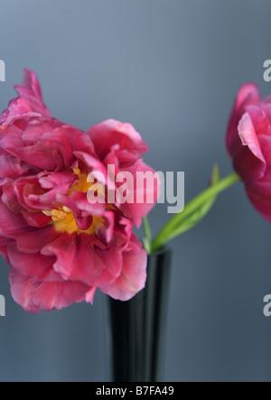 Rosa tulipanes en florero Foto de stock