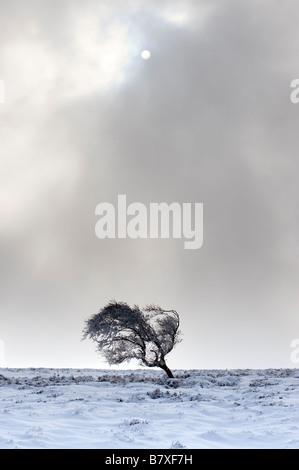 Un páramo solitario árbol en invierno