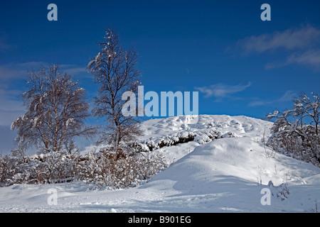 Arbolada paisaje cubierto de nieve, Rannoch Moor, mirando al este, en las Tierras Altas de Escocia, Escocia, Reino Foto de stock