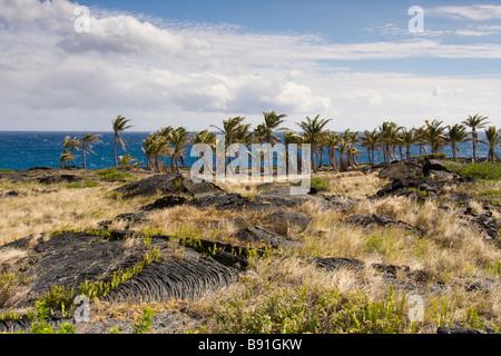 Las palmeras crecen en las antiguas corrientes de lava, cerca del extremo de la cadena de cráteres Road, Big Island, Foto de stock