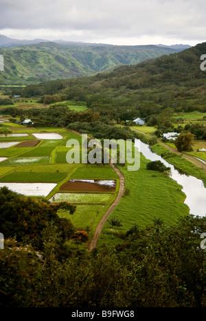 Valle de Hanalei Mirador. Una de las vistas más famosas de Kauai. La mayoría de los taro cultivado en Hawaii se cultiva aquí.