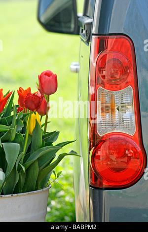 Tulipanes y coche (Tulipa hybr.) Foto de stock