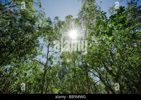 Verde bosque vibrante con el sol brillando a través de las hojas Foto de stock