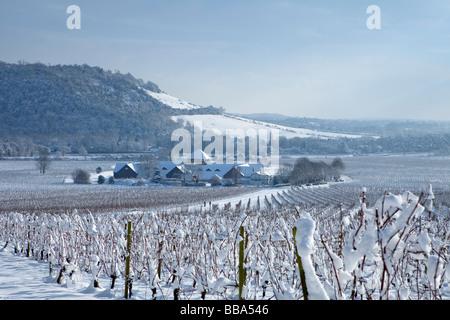 [Denbies vineyard en la nieve] con 'Box Hill' detrás