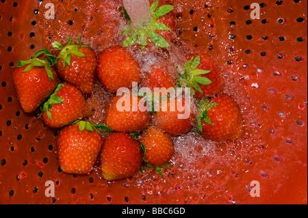 Lavar las fresas strawberry riddle pantalla tamiz tamiz de limpieza de agua jet red de riego cocina cocinar cocinando prepare