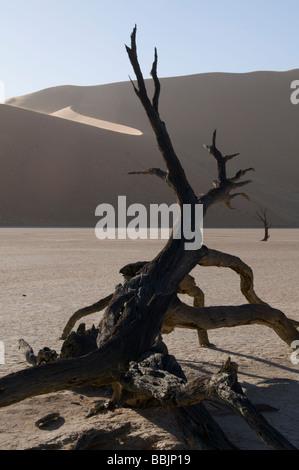 Los árboles muertos, Arcacia Camelthorn Erioloba, Deadvlei, cerca del parque desierto de Sossusvlei, Naukluft, Sesriem, Namibia