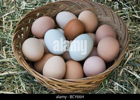 Huevos de gallina en el canasto, colores naturales.