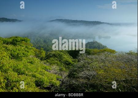 Niebla por la mañana temprano en la selva del Parque nacional Soberanía, República de Panamá. Río Chagres es visible a la derecha. Foto de stock