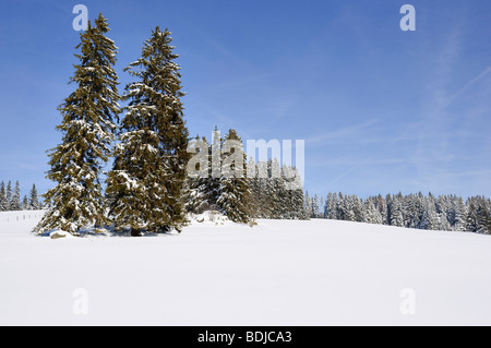 Selva Negra en invierno, Baden-Wurttemberg, Alemania