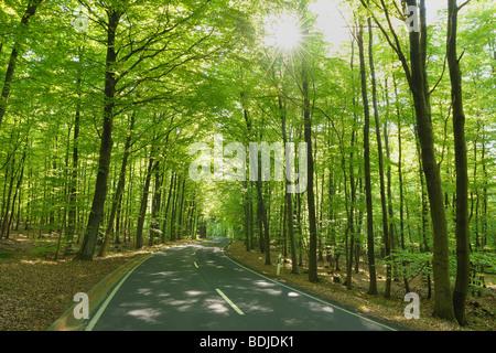 Camino a través del bosque de lenga en la primavera, el Spessart, Baviera, Alemania