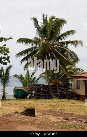 Casa nativa con zinc con techo de lámina y palmeras y flores en Big ...
