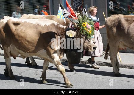 El Cow Parade en Suiza. bellamente decorado vacas que volvían a su casa del valle después de la etapa de verano en altitudes más altas. típica tradición suiza