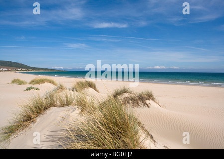 Bolonia Playa, Costa de la Luz, Andalucia, España, Europa